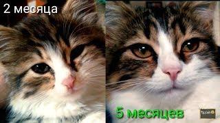 Как изменился котёнок за 3 месяца