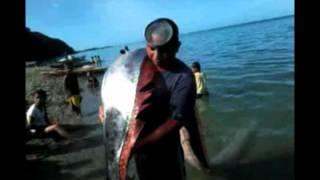LOOK: Giant oarfish found dead in Albay