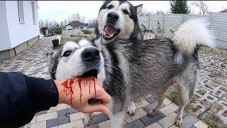 Собаки организовали ПОБЕГ Самые умные собаки в мире