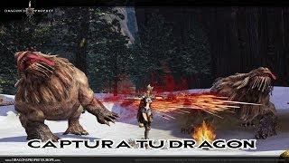 DRAGON'S PROPHET: Captura tu dragon [Guia/Esp]