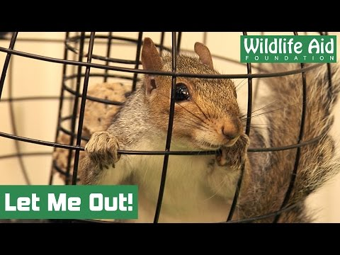 Wild birdfeeder on the loose at Wildlife Aid!