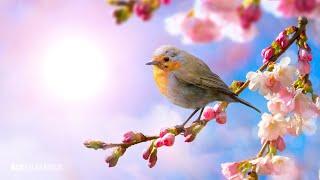 Beautiful Piano Music - Relaxing Music Study Music Stress Relief Sleep Music Elsa