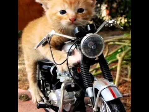 Cute funny cat pictures gallery