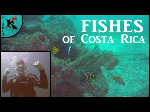 Diving Costa Rica - Electric Rays, Scorpionfish, Morays, & 15+ Species - Costa Rica Part 5