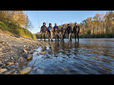 Too Many Salmon In This River! | Vedder River Salmon Fishing | Fishing Friends| Great Times