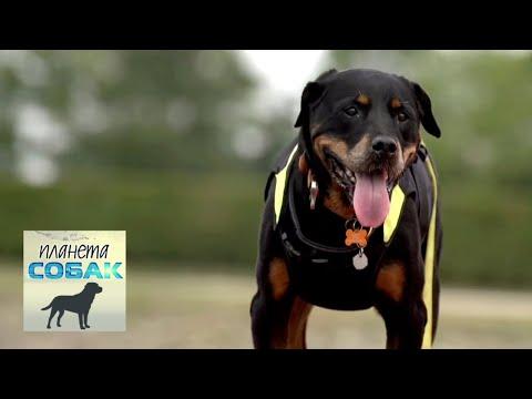 Собаки-криминалисты. Планета собак �� Моя Планета
