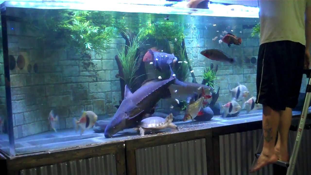 Monster Aquarium 1100g Feeding Youtube