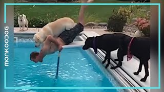 Can you stop Laughing? Watching this Funniest Dogs Compilation || Monkooog