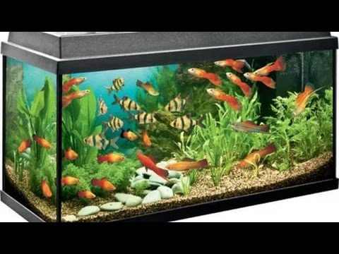 Популярные и неприхотливые аквариумные рыбки для ...