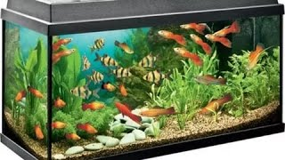 Популярные и неприхотливые аквариумные рыбки для начинающих аквариумистов! Простые аквариумные рыбки