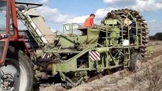 Fortschritt ZT 323 / E 686 & Belarus MTS 82 bei der Kartoffelernte