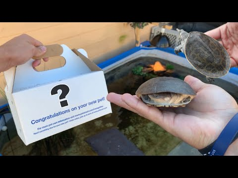 BUYING TURTLES for My POND!!