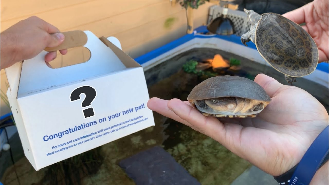 buying-turtles-for-my-pond