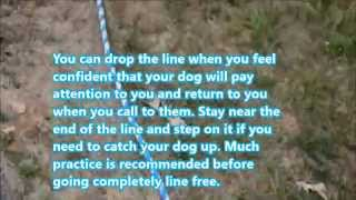 How To Train Your Dog To Walk Off Leash - Part One