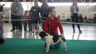Выставка собак в Тюмени