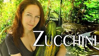 Zucchini / Courgette: the Summer Squash how to Plant, Grow and Care for your Courgettes