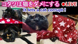 旅猫あずき ー保護猫から旅猫へー live stream on Youtube.com