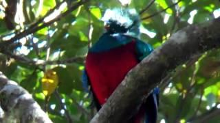 Half Day Tour to El Refugio del Quetzal