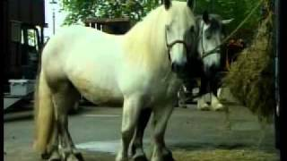 Repeat youtube video THE LONDON HARNESS HORSE PARADE