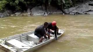 ikan patin sungai lipis,jeram besu (menjala)