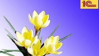 Подарок на 8 марта как зарегистрировать в учете? Видео уроки «1С:ЗУП 8».
