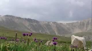 Альпийские луга. Теплый ключ. Джип туры на Алтай.(, 2013-01-27T17:36:33.000Z)