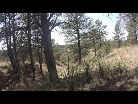 Turkey Hunting In Pine Ridge