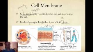 Bio Notes 14a: Cell Membrane & Cytosol