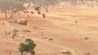Słonie wracają od wodopoju - Tsavo East National Park - Kenia - Afryka