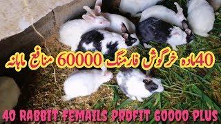 How To Start Rabbit Farming Business 2019 Rabbit Farming Cage System Khargosh Farming Urdu