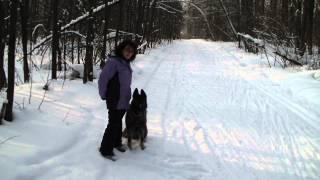 Дрессировка восточно-европейской овчарки http://dogclass.ru/