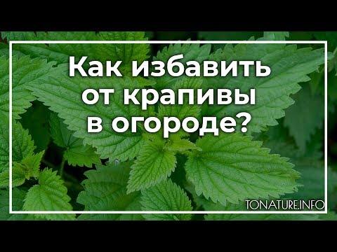 Вопрос: Какие есть способы избавления от крапивы на дачном участке?
