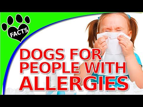 TopTenz: Dogs That Don't Shed Too Much for People with Allergies (Hypoallergenic)  Animal Facts