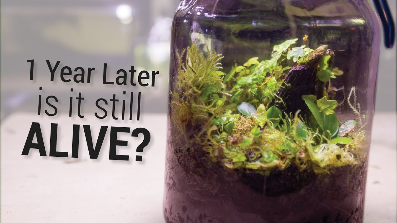 Closed Tropical Terrarium 1 Year Update Youtube