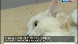 Новейший аппарат УЗИ появился на станции по борьбе с болезнями животных в Иркутске