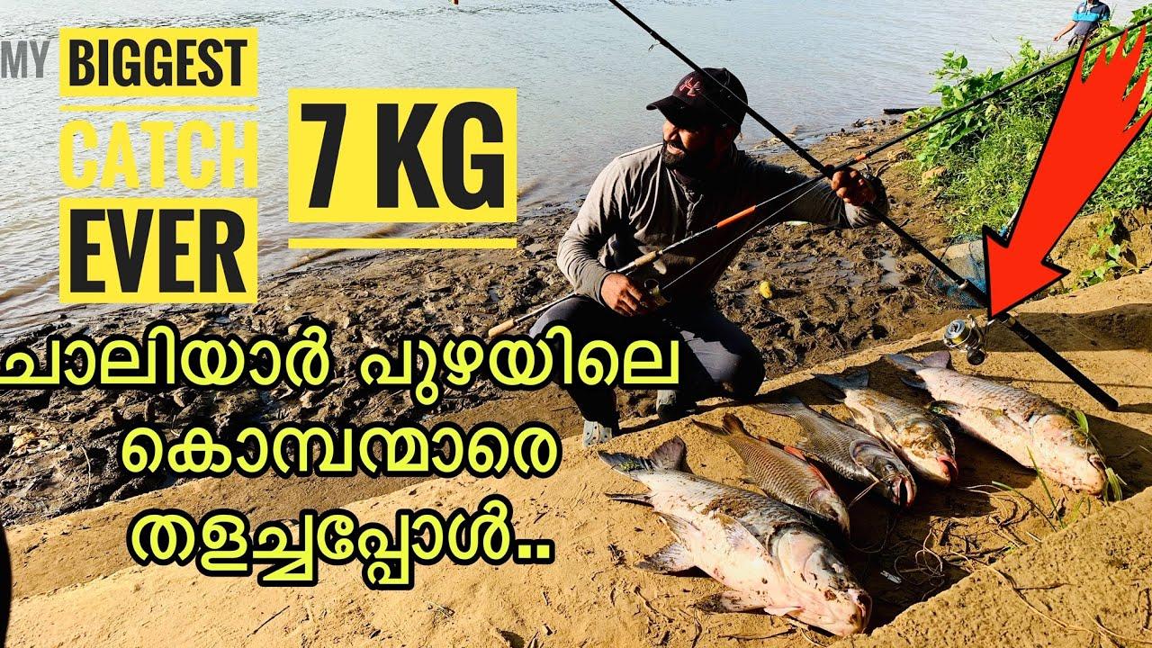 Giant River Fishes Of Chaliyar | ചാലിയാർ പുഴയിലെ കൂറ്റൻ മീനെ കയറ്റിയപ്പോൾ ..