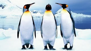 Виды пингвинов фото и описание