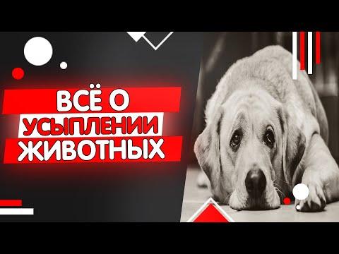 Усыпление кошек и собак, эвтаназия животных