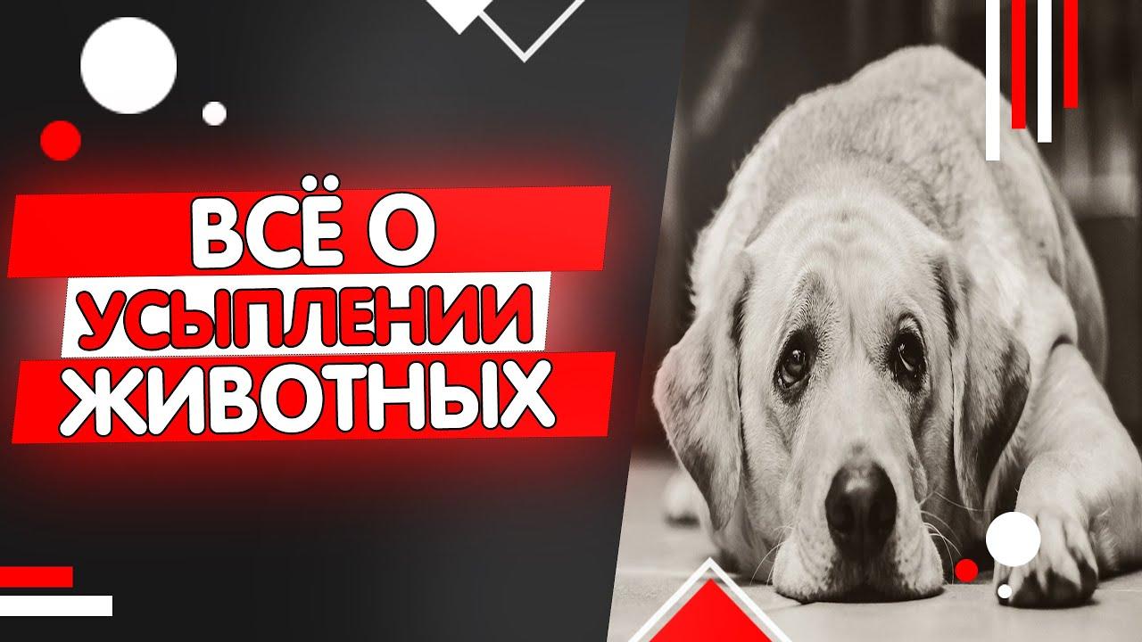 Усыпление кошек и собак, эвтаназия животных - YouTube