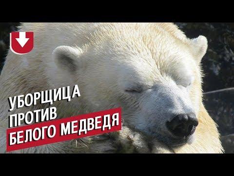 Уборщица против белого медведя. Необычная «дуэль» из Московского зоопарка попала на видео