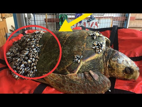 When Fisher men Saw Turtle Floating In The Water, They Realized He Desperately Needed Help