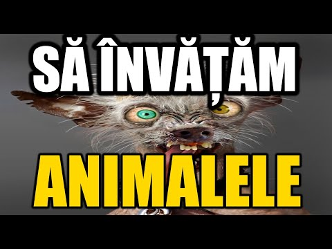 Sa invatam animalele - Film educativ pentru copii