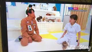 2017年9月30日放送 日テレ「天才!志村どうぶつ園」に 我が家で生まれた柴犬たちが出演しました。