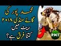 Cow Mandi 2018 Muhammad-Pur | Latest Price Updates of Cows & Bulls for Qurbani at Bakra Eid 2018