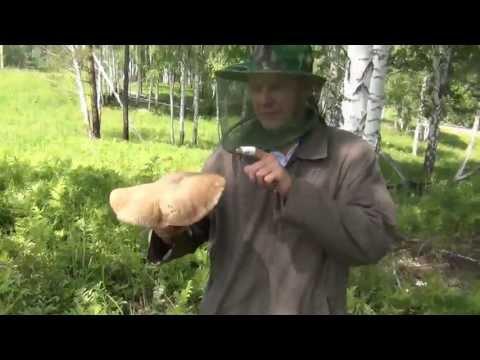 Мицелий грибов как выращивать в домашних