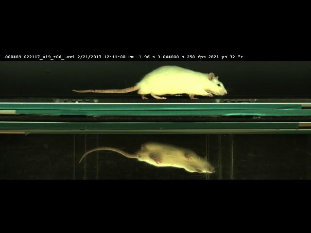 EDGAR - Inconsistent Velocity