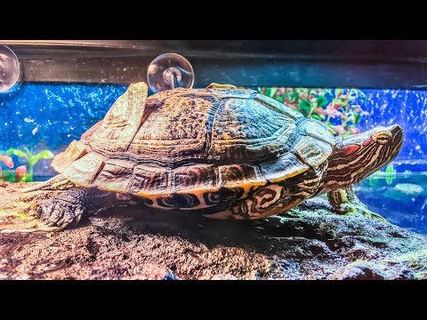 Turtle Shell Peeling and Shedding Scutes? Why They Do This And What To Do