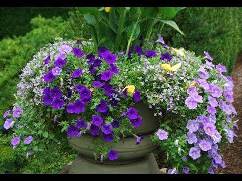 Выращивание цветов в горшках и контейнерах