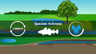 The importance of small waterbodies for biodiversity and ecosystem services