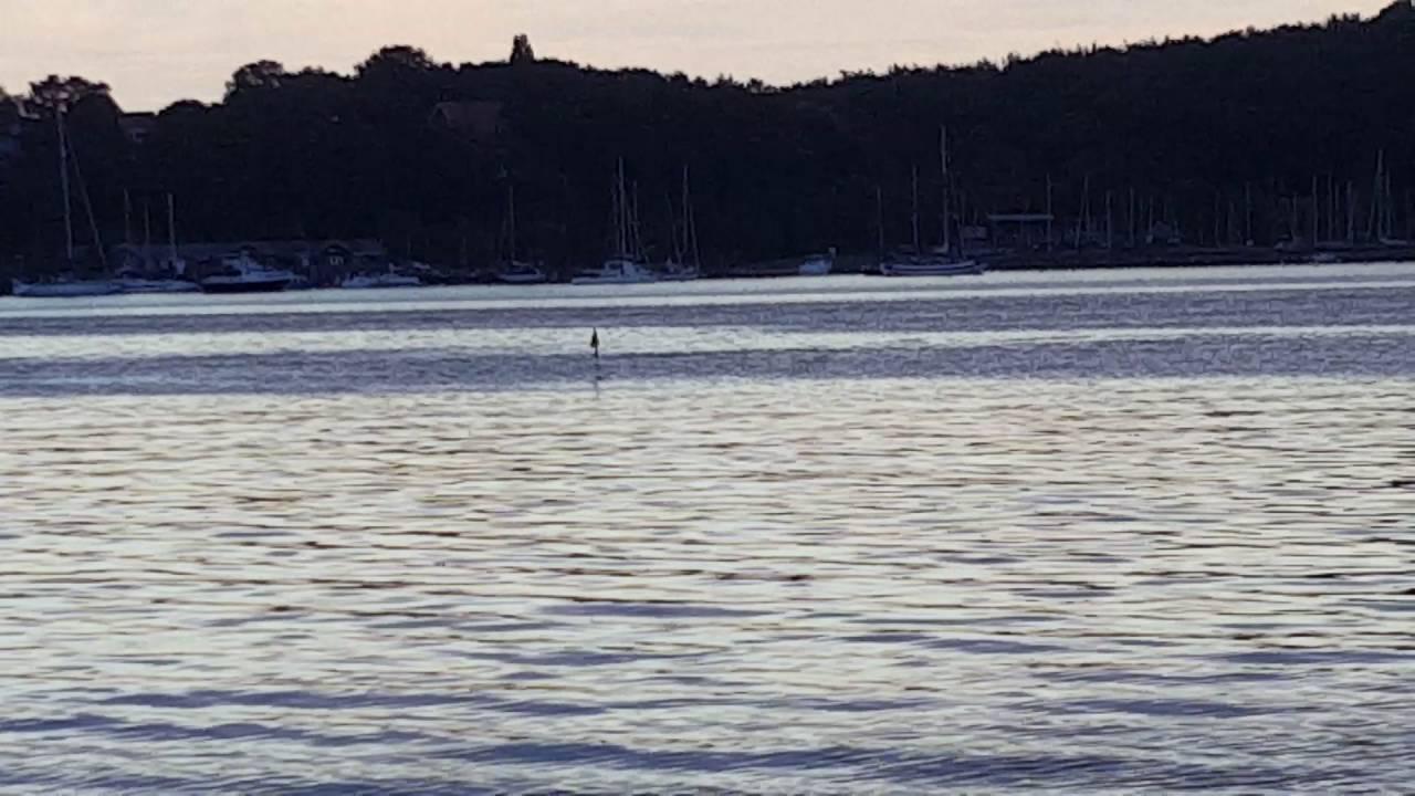 delfin eckernförde